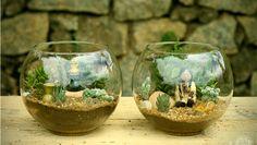 O pequeno jarro de plantas requer pouca manutenção