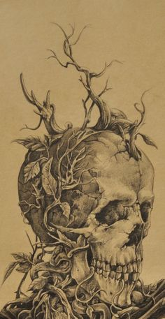 • drawing death pencil skull nature butterfly Macabre noiaillustration noiaillustration •