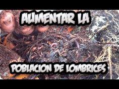 Como Estimular Y Aumentar La Reproduccion De Las Lombrices || La Huertina De Toni - YouTube