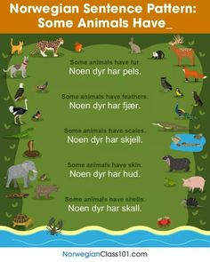 Norwegian Sentence Pattern: Some Animals Have. Learn French Fast, Norwegian Words, Learn Thai, Norway Language, Learn Hindi, Hebrew School, Learn Hebrew, Scandinavian Countries, Stavanger