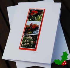 Handmade Holiday card New Zealand Pohutukawa tree by NewCreatioNZ