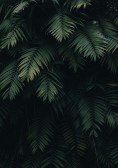 10 Tropical Jungle iPhone X Wallpapers wallpapers, Hintergrund - PintoPin - - 10 Tropical Jungle iPhone X Wallpapers – iPhone Wallpapers 10 Tropical Jungle iPhone X Wallpapers 10 Tropical Jungle iPhone X Wallpapers by Preppy Wallpapers. Leaves Wallpaper Iphone, Original Iphone Wallpaper, Palm Wallpaper, Tropical Wallpaper, Tumblr Wallpaper, Aesthetic Iphone Wallpaper, Screen Wallpaper, Aesthetic Wallpapers, Wallpaper Backgrounds