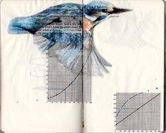 Paula Swisher y las aves que se leen « Cultura Colectiva
