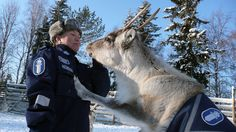 I see your New Zealand police guinea pig and raise with Finnish police reindeer