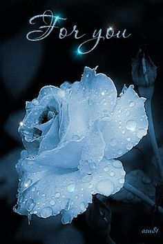 For you blue rose ~ Gif ✿⊱╮ Beautiful Rose Flowers, Beautiful Gif, Love Rose, My Flower, Flower Power, Beautiful Flowers, Beautiful Pictures, Whatsapp Pink, Glitter Graphics