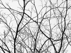 """""""tree branches silhouette"""" zdjęć stockowych i obrazów royalty free w Fotolia.com - Obraz 94391563"""