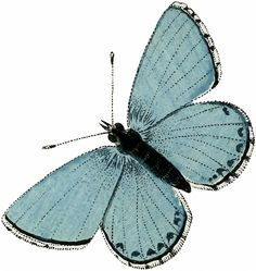 Vintage Aqua Blue Butterfly Image! - The Graphics Fairy //  From a Circa 1863 German Natural History Butterflies and Moths Book.