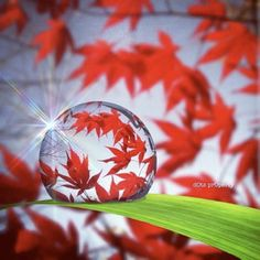 Dew Drop Reflection. Sure don't know if it's real, but it's something pretty all the same.