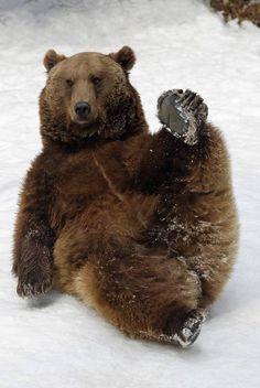 В Баварии засняли двух катающихся по снегу медведей (5 фото) - Хорошие новости про животных