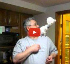 Swearing Cockatoo's hilarious temper tantrum
