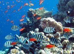Spuren des Wandels: Was geht vor im Meer?