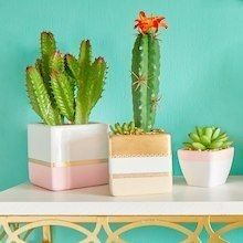 Make this pastel and gold washi tape planters project, it is an easy DIY summer home decor craft. Gold Washi Tape, Washi Tape Crafts, Diy Crafts For Adults, Diy And Crafts, Tin Can Crafts, Diy Mugs, Painted Vases, Dollar Store Crafts, Dollar Stores