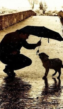 Man shelters dog under his umbrella. I LOVE THIS MAN