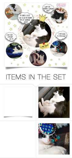 """""""The Queen of My Heart"""" by mahafromkailash ❤ liked on Polyvore featuring art and cats"""