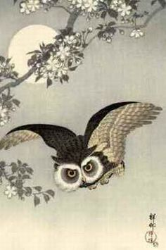 小原祥邨 Scops owl flying under cherry blossoms,a full moon behind