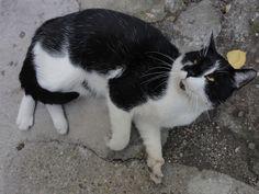 Cica a Svábhegyről.