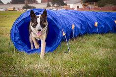 How to build an agility course for your dog at home!