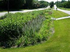 This rain garden sits between a divided street similar to East Nationway in Cheyenne. This would be a great addition for infiltrating water, pollutants and sediment.
