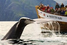 Whale watching in Iceland? Yes please. See more here: http://www.whalewatchingicelandtour.com/