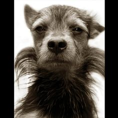 Portrait of One Cool Dawg by Traer Scott. Sadly, this dog is one of many in America's animal shelters.