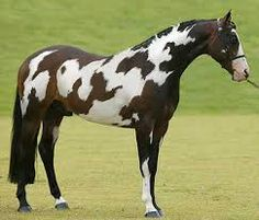 Image result for paint horse with the word horse on its side