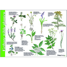 Sacred Plant, Color Meanings, All Nature, Edible Plants, Camping Survival, Dark Ages, Bushcraft, Tree Branches, Diy For Kids
