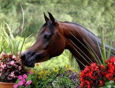 ♥ Arabian in the garden ♥