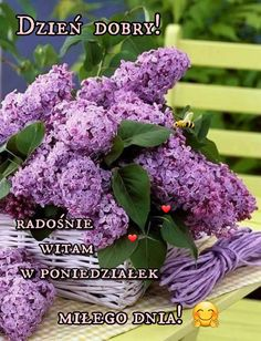 Lilac Tree, Lilac Flowers, Purple Lilac, My Flower, Beautiful Flowers, Lilac Bouquet, All Things Purple, Trees To Plant, Floral Arrangements