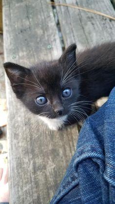 Little woods kitten
