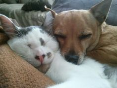 Two animals per apartment is perfect <3