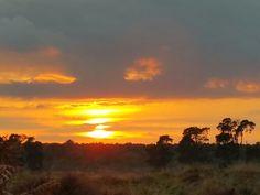 Thetford Forest in Thetford, Norfolk