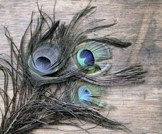 Pretty Peacock  Antique Millinery Feathers  Boho  by becaruns, $16.50