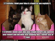 2/3 kittehs...