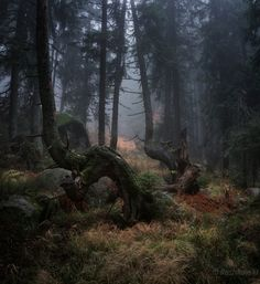 Forest was deep and dark Fantasy Forest, Nature Aesthetic, Deep Forest, Environment Design, Belleza Natural, Beautiful Landscapes, Strand, The Great Outdoors, Woodland