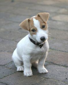 Puppy Liza by Jenny