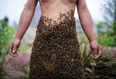Grâce à une reine placée sur son corps, cet apiculteur chinois a attiré plus de 330 000 abeilles en une heure, Chongqing (Chine), le 18 avril 2012.