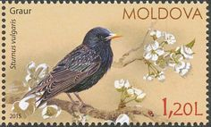 Common Starling stamps - mainly images - gallery format
