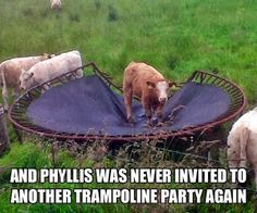 Poor Phyllis OMG remember when we jumped on our trampoline till it was Almost completely off the springs???!!! LOL