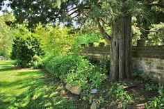 Yes, Plant EASTERN RED CEDAR in Your Yard.  Isn't picky about soil types; it thrives just about anywhere. Likes full sun. The Eastern red cedar is also good as a windbreak and screen. Birds love this evergreen, and we love the birds. They feed on its berries over winter and nest in its dense foliage.