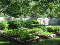 LOVE these raised beds made from logs/branches.