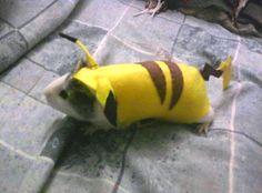DIY Guinea Pig Pikachu Costume - petdiys.com