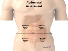 A nursing health assessment of the gastrointestinal system involves the examination of the abdomen and abdominal contents. Med Surg Nursing, Nursing Assessment, Hospice Nurse, Medical Laboratory Science, Nursing School Notes, Emergency Medical Services, Human Anatomy And Physiology, Nurse Life, Nursing Students
