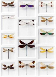 Christopher Marley Insect Art - Damselfly Mosaic | Gracious Style