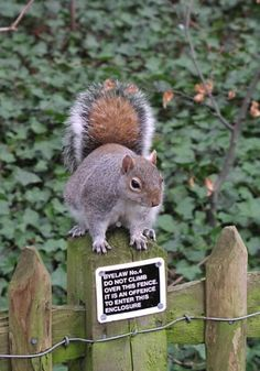 A squirrel that bends the rules…