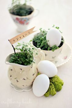 Spring in a Cup (chia sprouts) Inspiration...great idea to sprout in a cute cup!