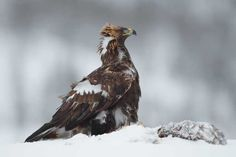 New measures to tackle the deaths of birds of prey in Scotland