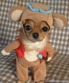 cute dog... < DogSiteWorld-Store >    http://dogsiteworld.com/
