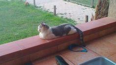 Un chat que je ne connais pas !