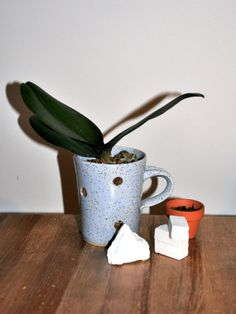 polkadot planter cup for orchid, 3 inches orchids pot, baby blue freckle with handle