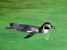 Aquarellkurse und Malevents für Familien im Rostocker Zoo | Aquarellkurs im Rostocker Zoo bei den Pinguine (c) Frank Koebsch (1)